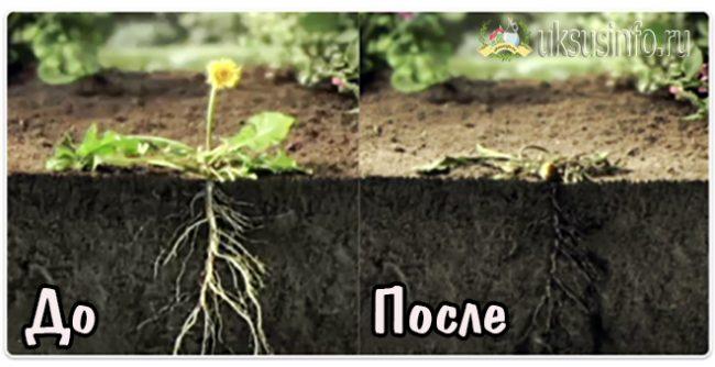 Воздействие на корневую систему