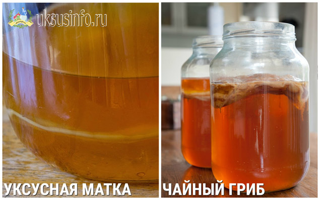 Чайный гриб и мать уксуса